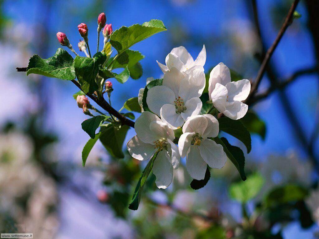 Benvenuta primavera frz40 39 s blog for Primavera immagini desktop
