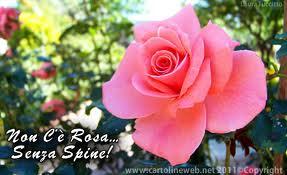 rosa spine